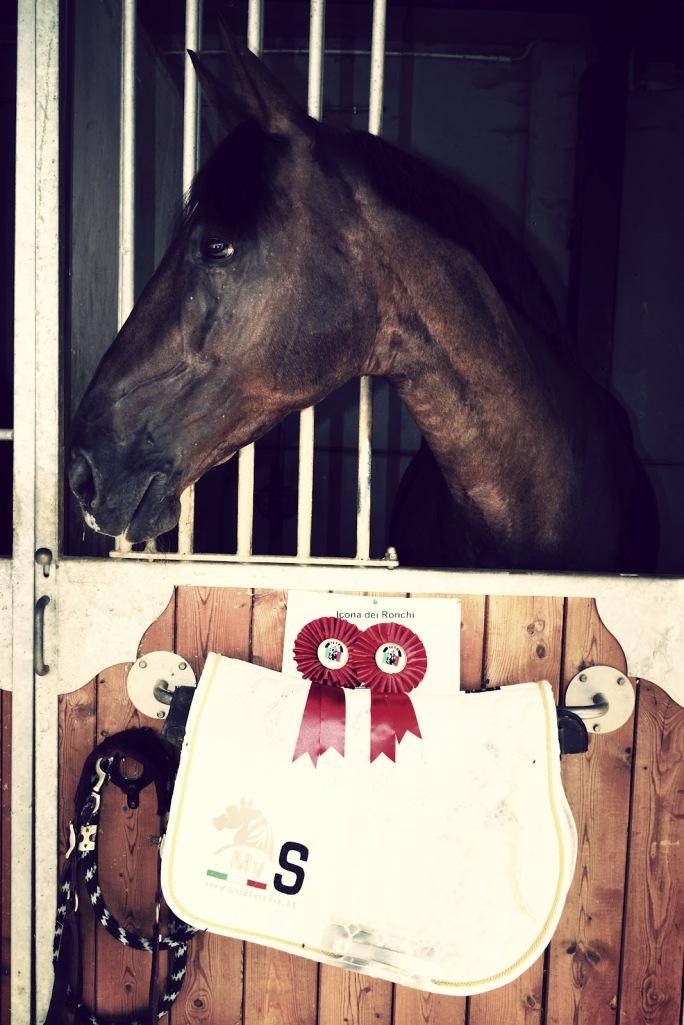 Gaia_Vincenzi_Icona_dei_Ronchi_Etrea_Sport_Horses_My_Selleria_saddle_pad