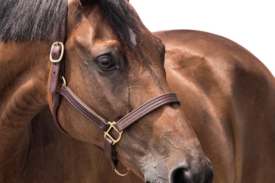tristan_dark_horses_gaia_vincenzi_sebastiano_ringozzi_brodie_DSC8546