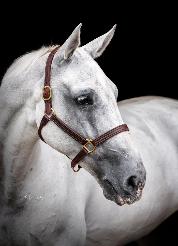tristan_dark_horses_gaia_vincenzi_sebastiano_ringozzi_cinnamon_DSC8946