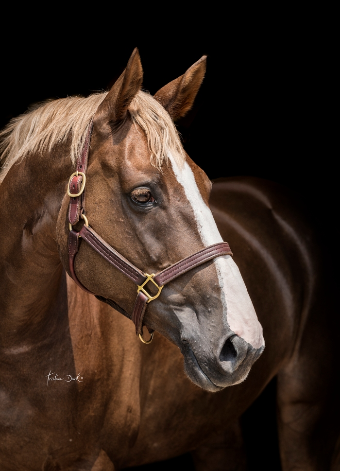 tristan_dark_horses_gaia_vincenzi_sebastiano_ringozzi_venise_DSC8588